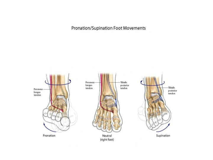Foot moving in various directions
