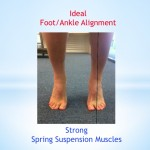 Ideal Foot/Ankle Alignment