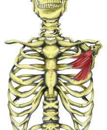 Compression of Pectoralis Minor